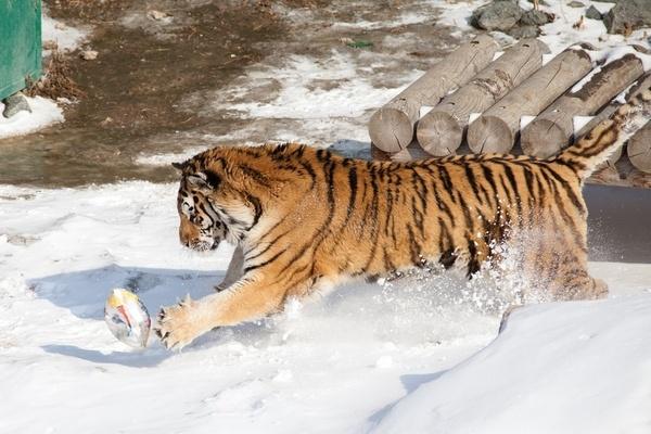 Челябинский зоопарк